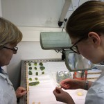 Making thin sections to study biomineralisation